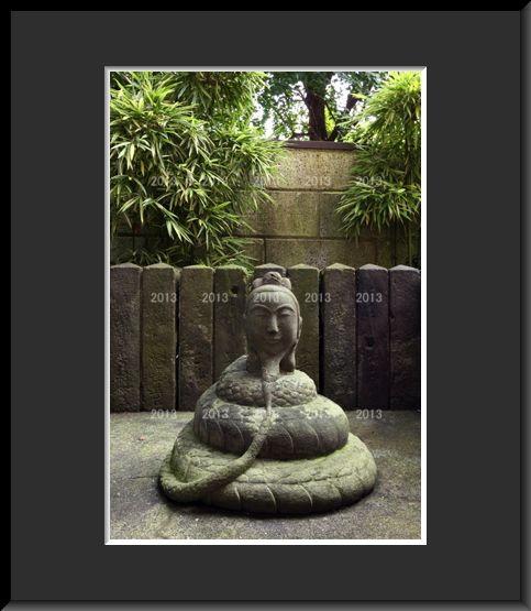 蛇 木母[1].jpg